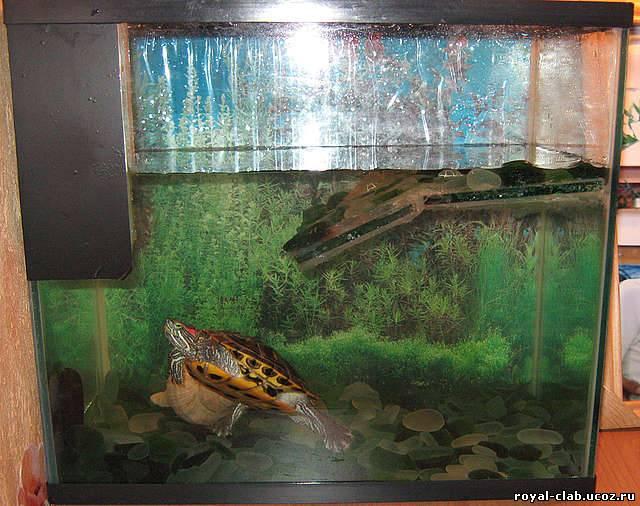 Еще у меня дома полный аквариум разных